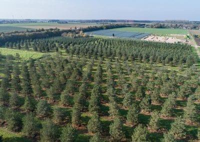 Pinus-WEIH-Drohne