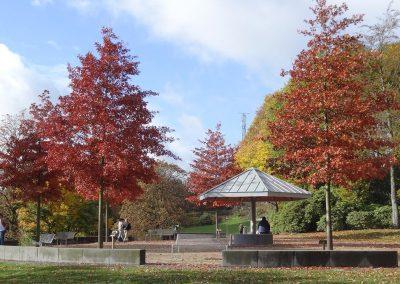 Wuppertal Quercus